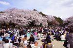 新宿御苑 の お花見 @ 新宿